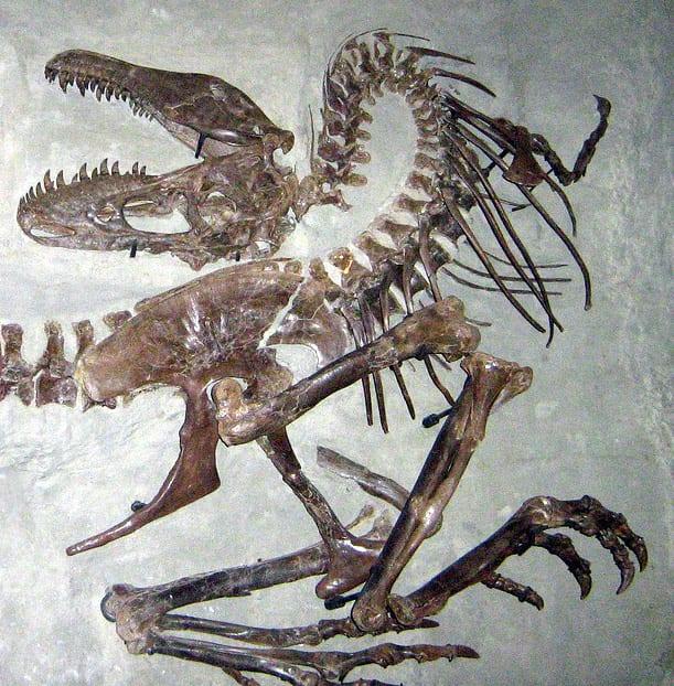 Dinosaur Death Pose