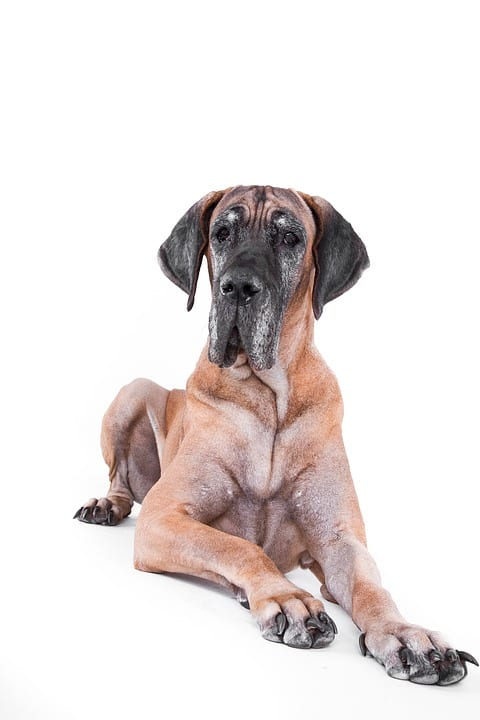 Aging in Dogs