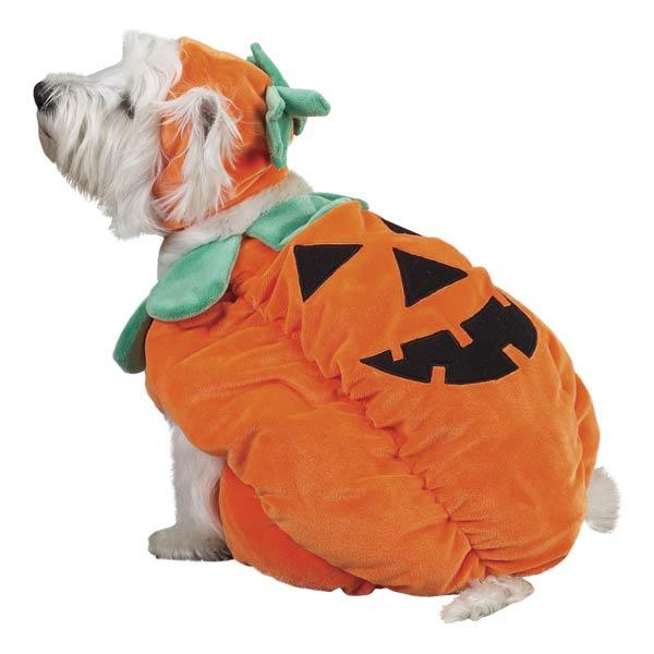 Big Dog Pumpkin Halloween Costume  sc 1 st  Philosophy of Dog & Big Dogs and Halloween - Philosophy of Dog