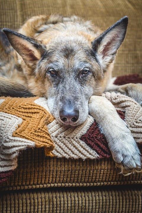 Respecting the Senior Dog