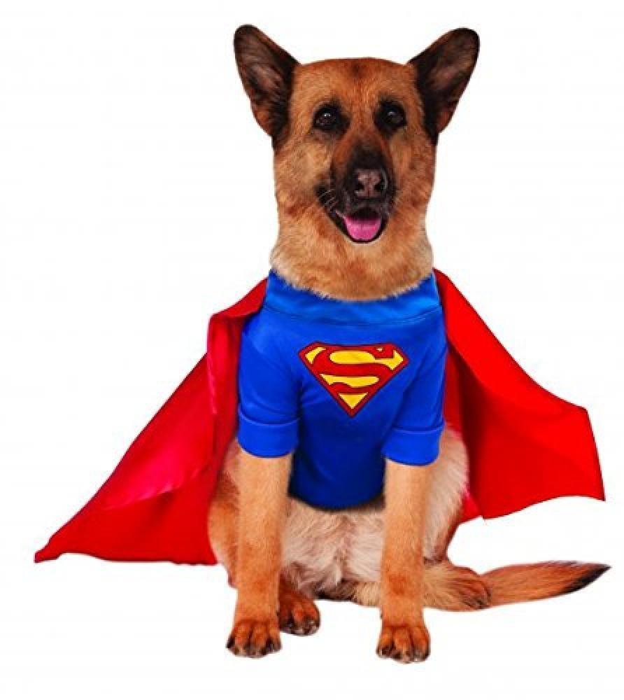 Big Dog Superman Halloween Costume