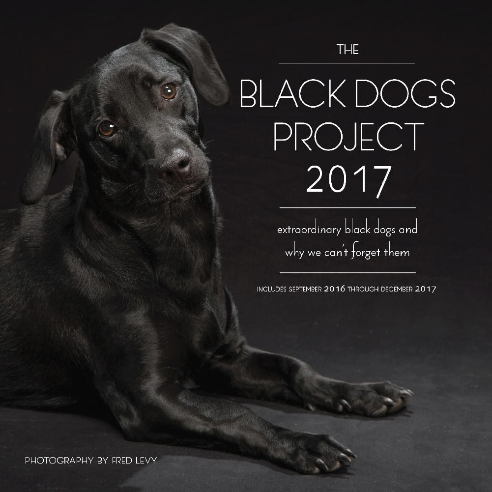 Black Dogs Project Calendar