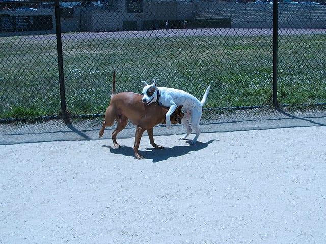Dominant Behavior in Dogs
