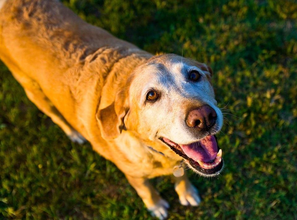 Talk to Your Senior Dog