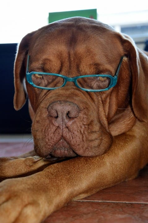 10 Statistics Every Dog Owner Should Know