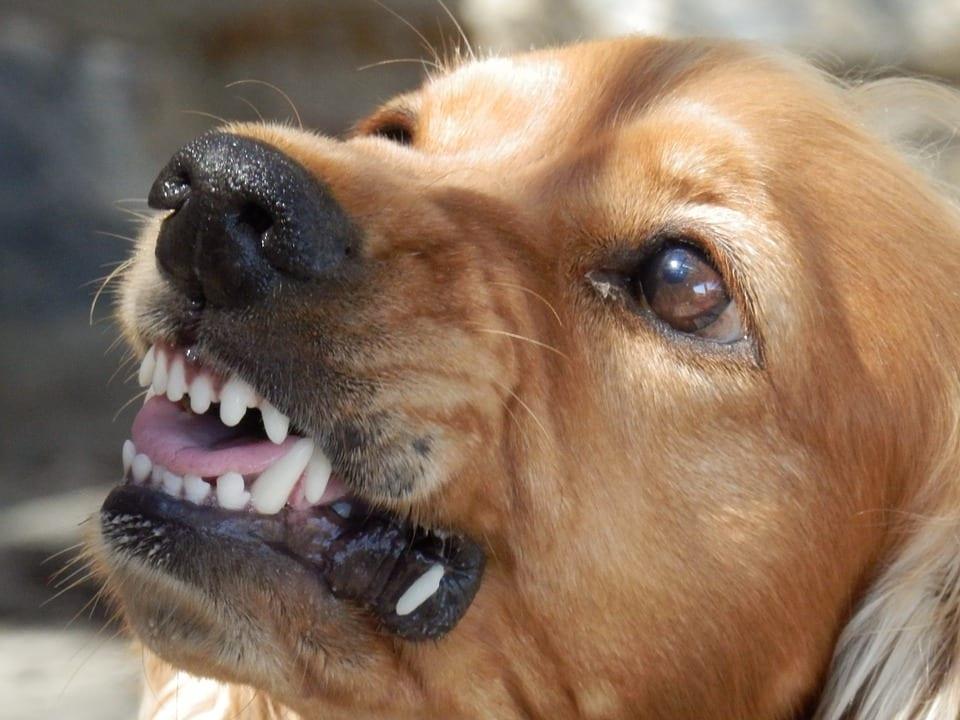 Dog Bite Statutes