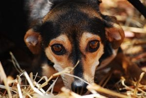 How to Soothe An Anxious Dog
