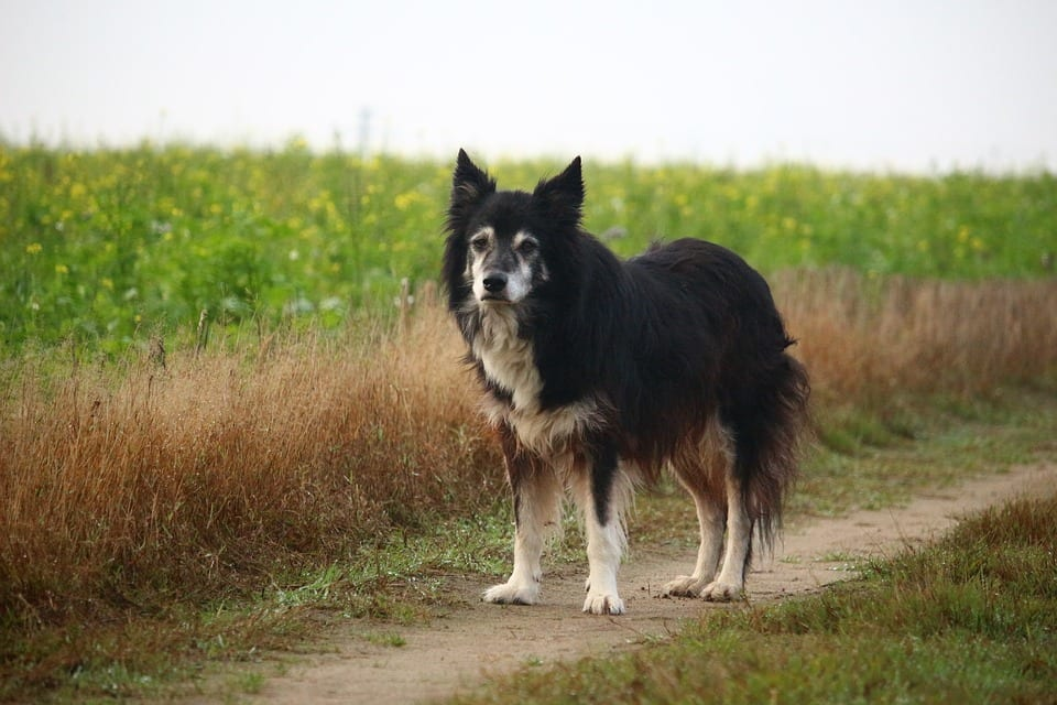 Questions About Owning a Senior Dog