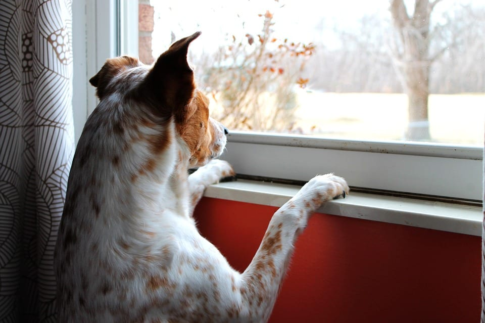 Routine Helps Anxious Dogs