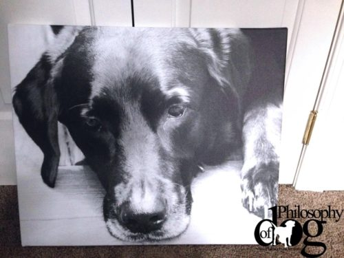 Make a Canvas Print of Your Dog