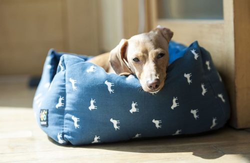 Consider moving your dog's bed