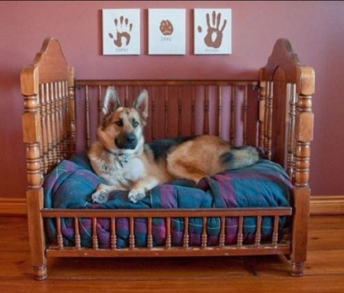 Dog Decor Bed