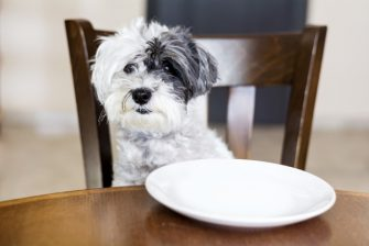 Which Dog Food Company Has Had the Most Recalls