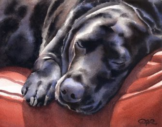Black Lab Sleeping by DJ Rogers