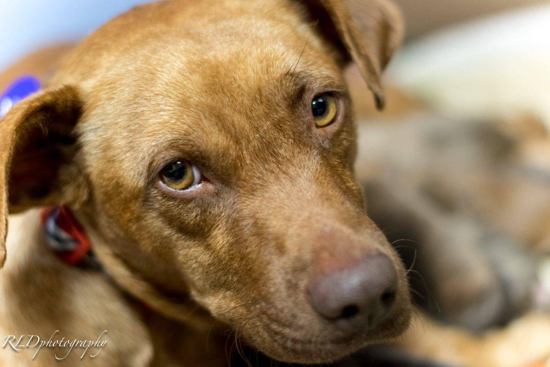 Rescue Dog Autumn