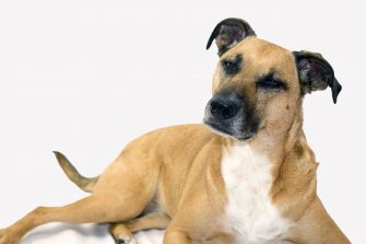 Why Are Rescue Adoption Fees So High?