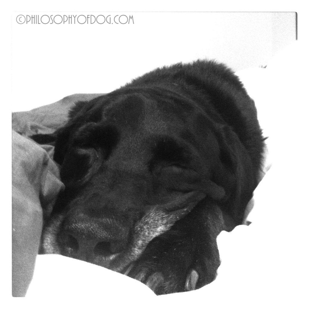 My Happy Boy, Copyright Philosophyofdog.com