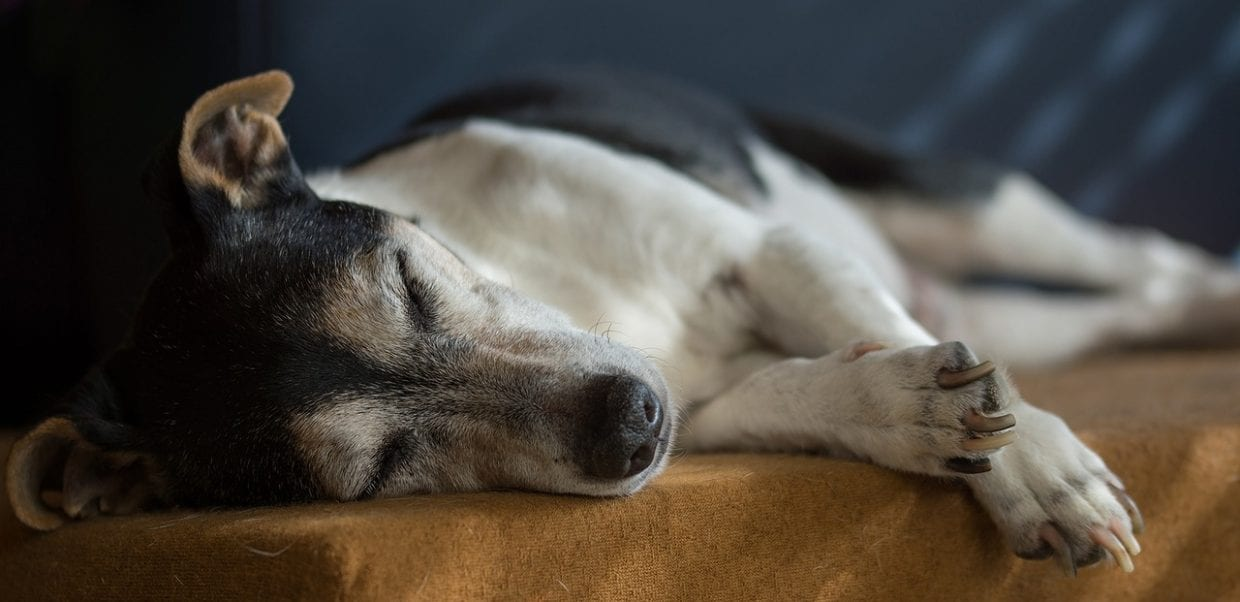 Respect Your Senior Dog and Make Sure Your Puppy Does Too!