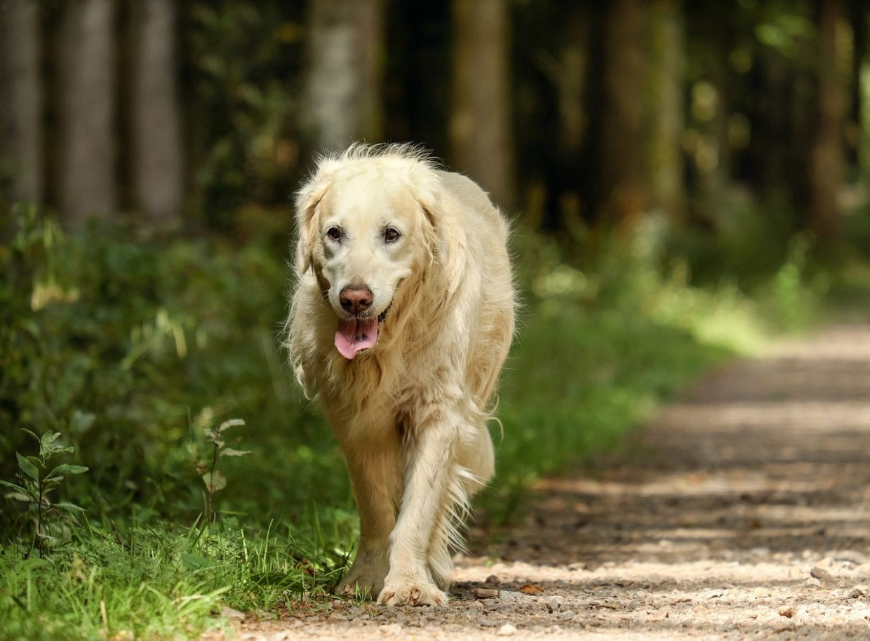 Don't Leave Your Senior Dog Out!