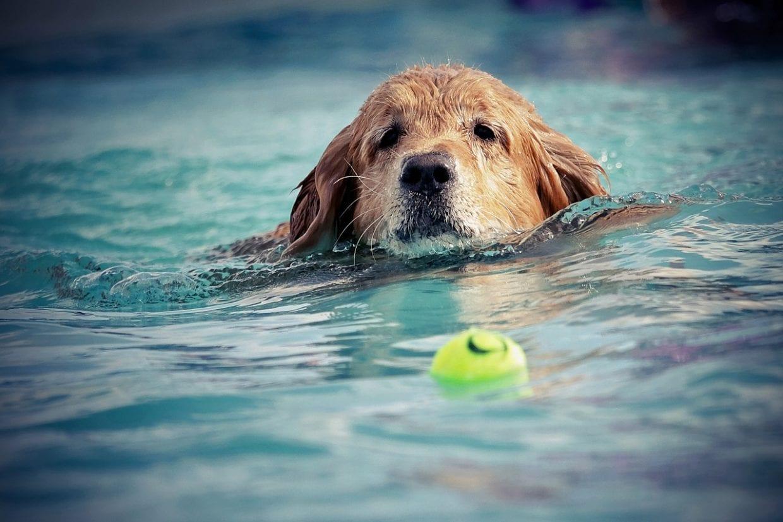 Swimming for Senior Dogs