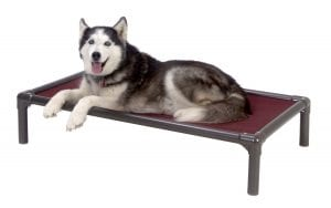 The Best Cot Bed for Senior Dogs