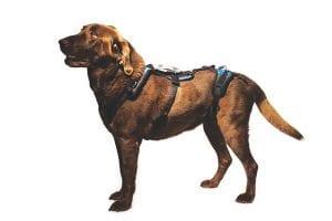 The Best Big Dog Harness