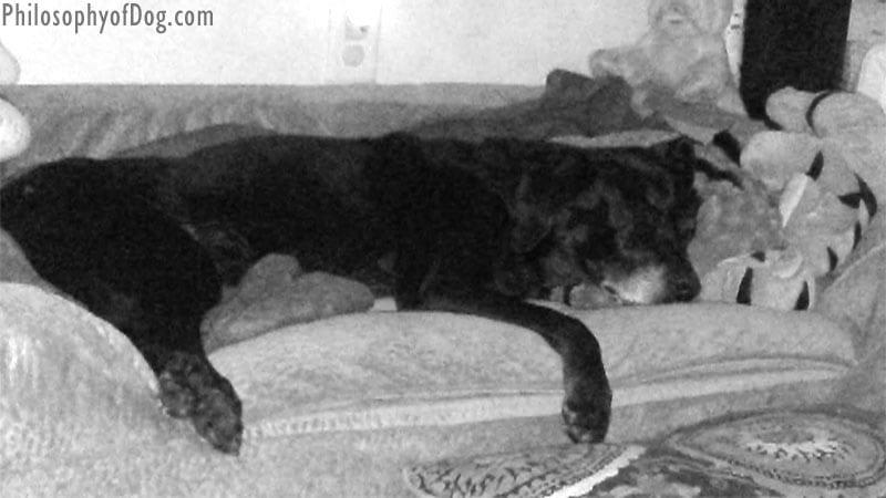 Jet Snoozer Forgiveness Bed