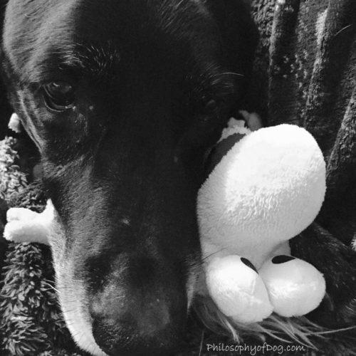 My Boy Copyright Philosophy of Dog