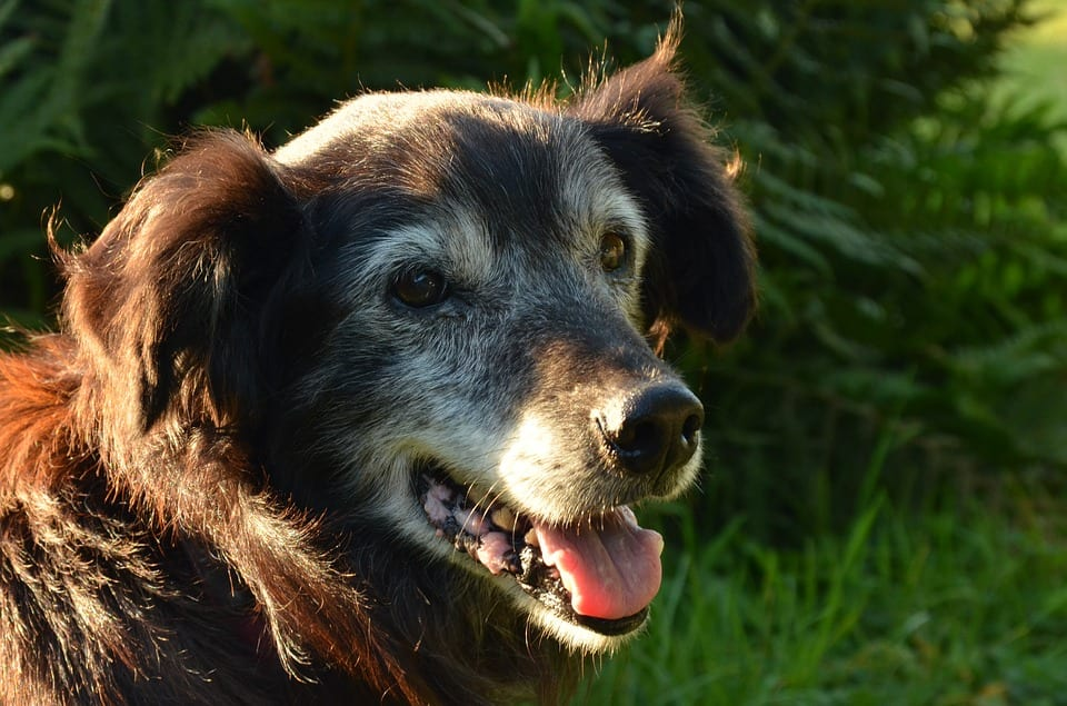 5 Ways to Soothe Sundowning in Dogs