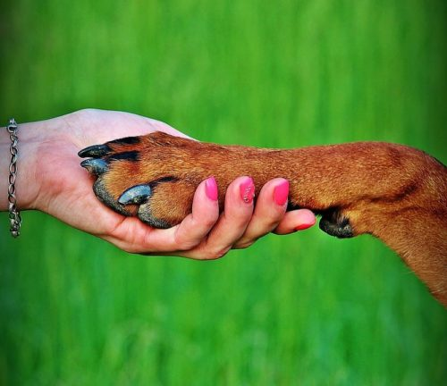 What is a Dog Foster?