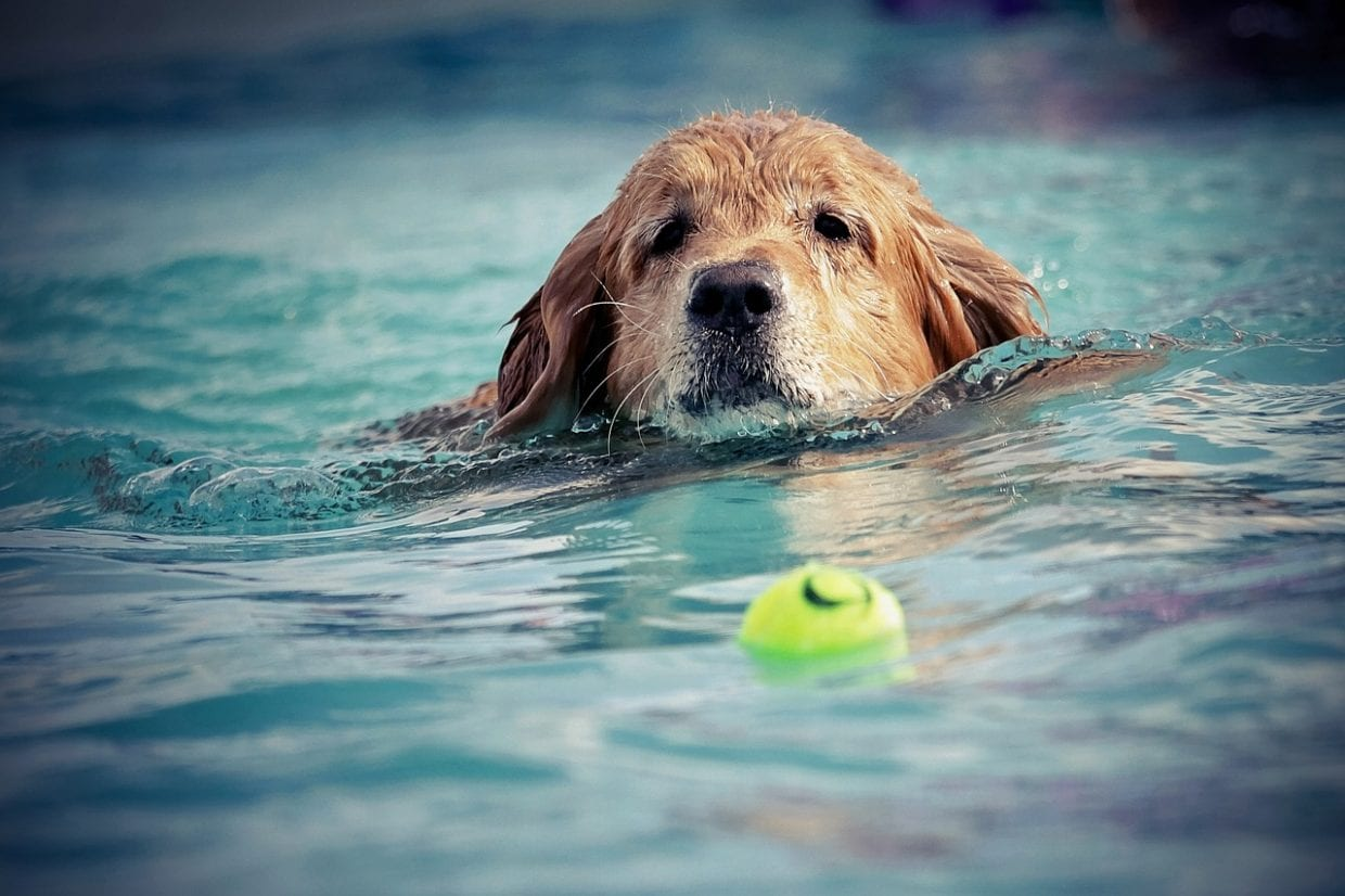 Swimming for Senior Dogs